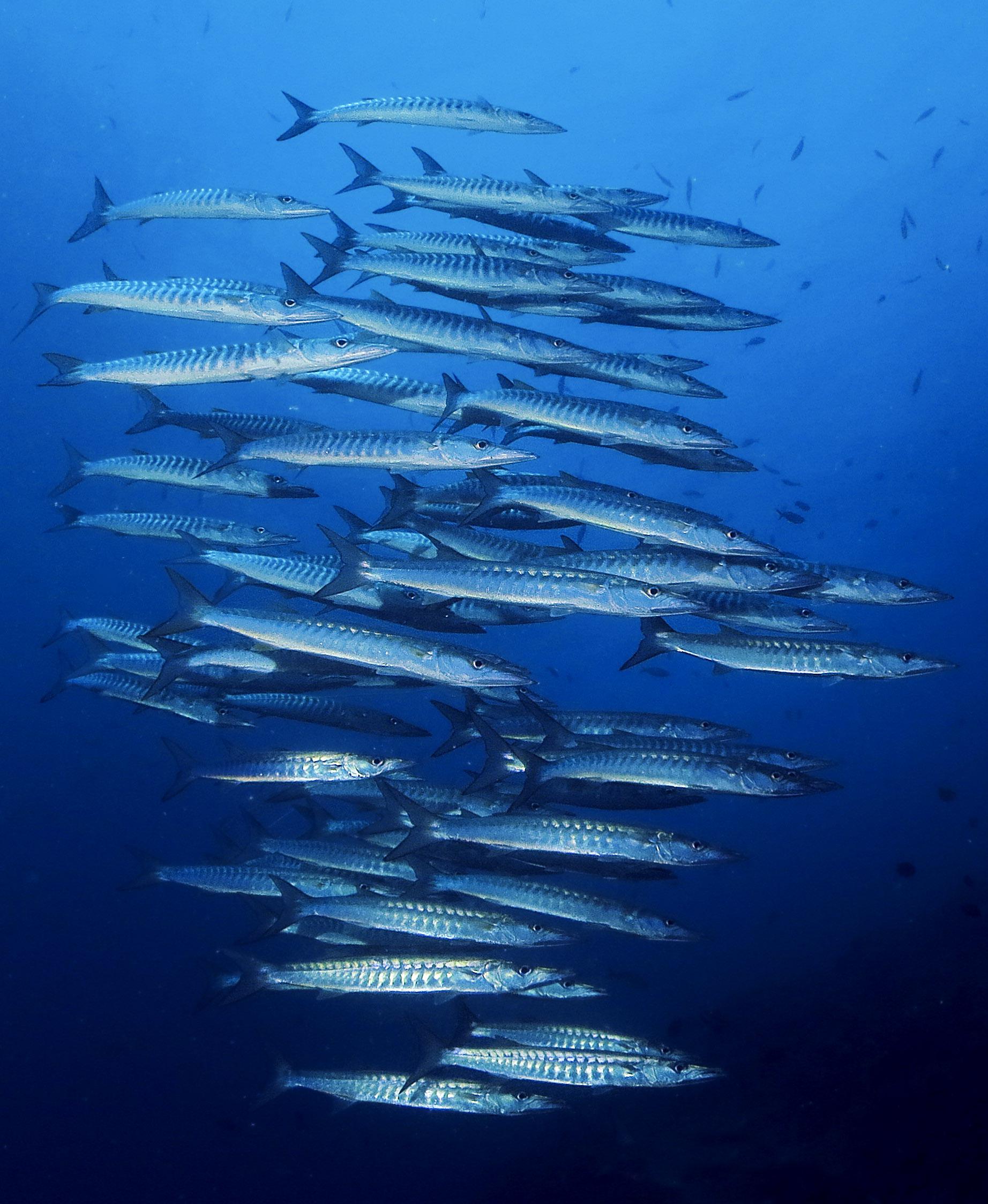 Deep Diver Koh Lanta