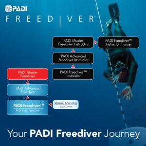 advanced freediver course koh lanta