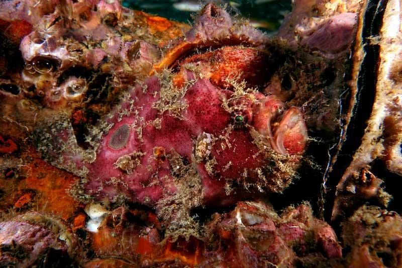 frogfish kled keow koh lanta