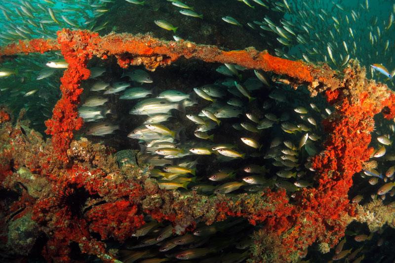diving ko lanta wreck