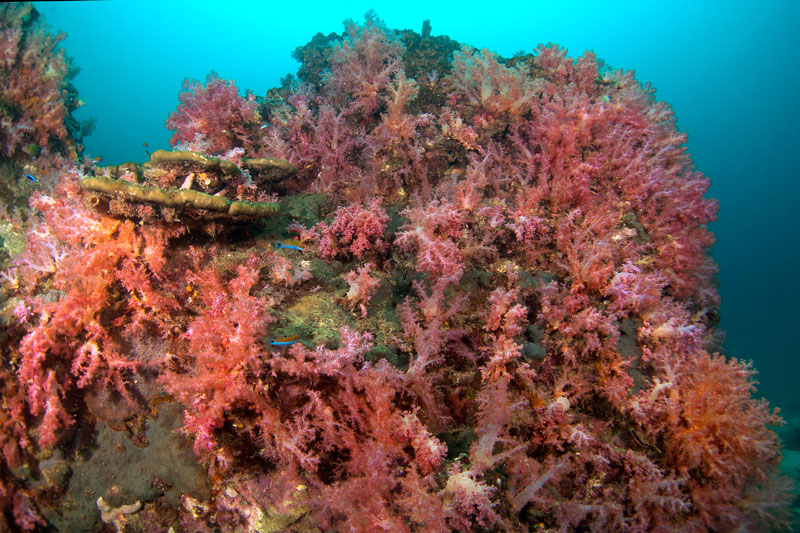 koh lanta coral